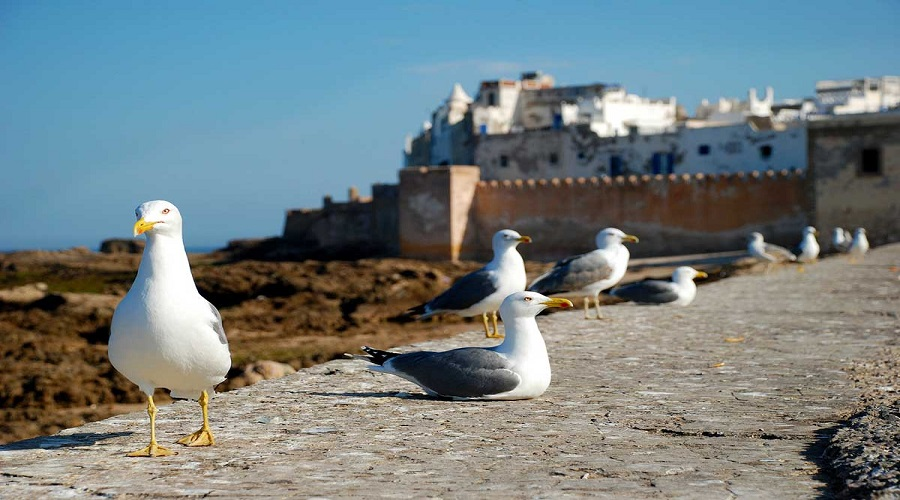 One Day Excursions From Marrakech : Essaouira